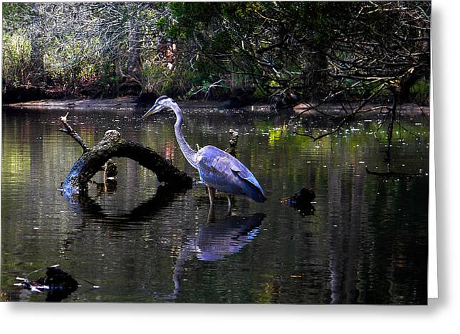 Heron And Root Greeting Card by Christy Usilton
