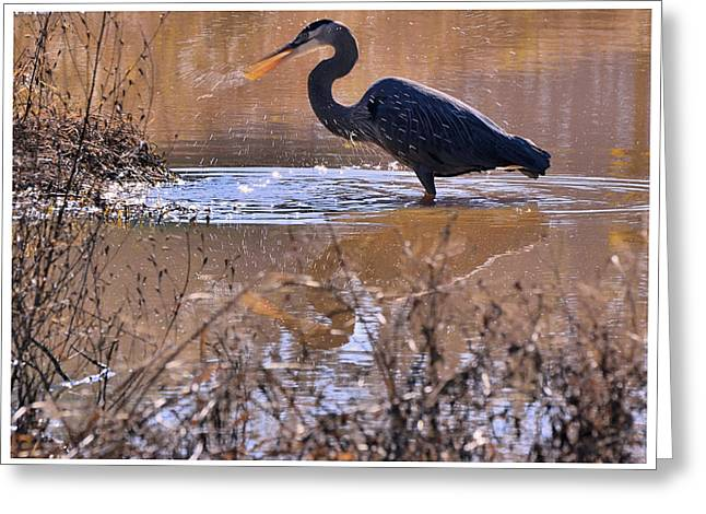 Heron Head Shake - C3136u Greeting Card by Paul Lyndon Phillips