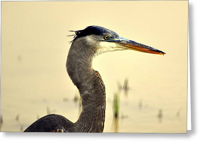 Heron One Greeting Card by Marty Koch