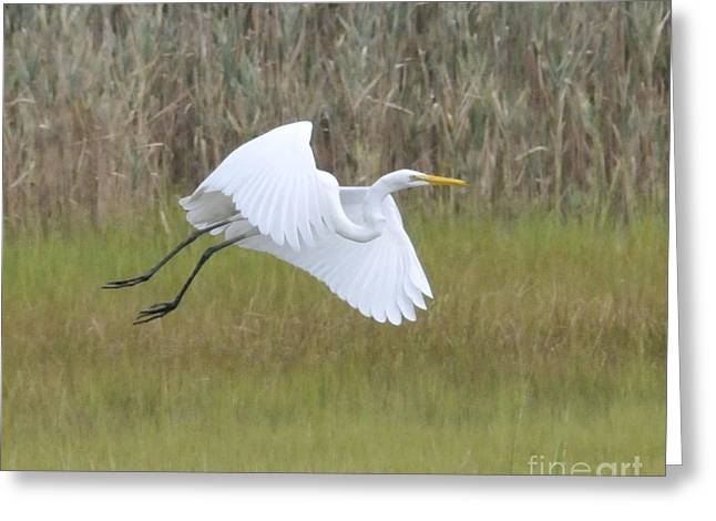 Heron Over Connecticut Marsh Greeting Card