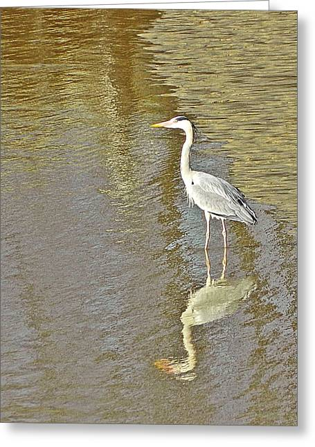 Heron Greeting Card by Sharon Lisa Clarke