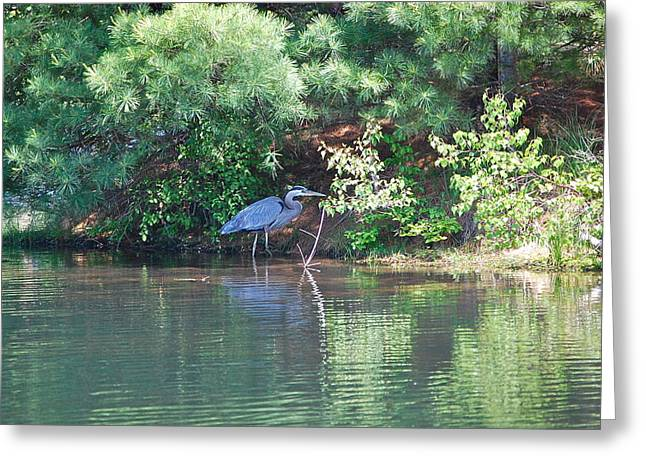Heron Under Pines Greeting Card