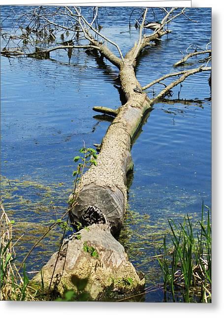 Herrick Lake Greeting Card by Todd Sherlock