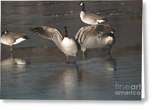 Greeting Card featuring the photograph Hey Over Here by Mark McReynolds