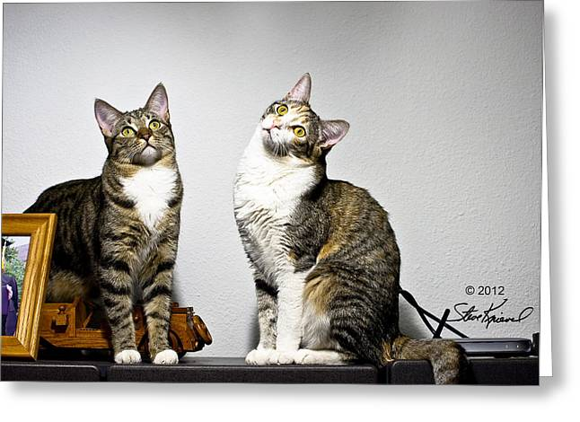 Hey Sis Whats Up There Photograph By Steve Knievel