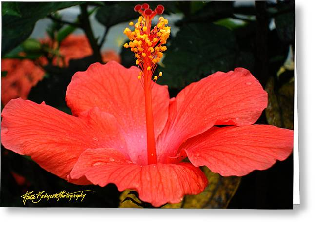 Hibiscus Bowl Greeting Card by Ruth Bodycott