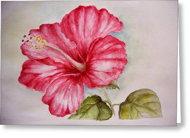 Hibiscus Flower Greeting Card by Draia Coralia