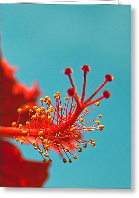 Hibiscus Greeting Card by Jocelyn Kahawai