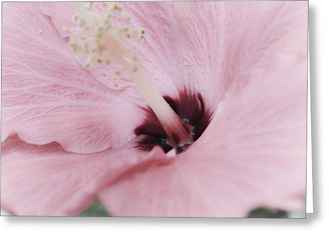 Greeting Card featuring the photograph Hibiscus Moments by Janie Johnson