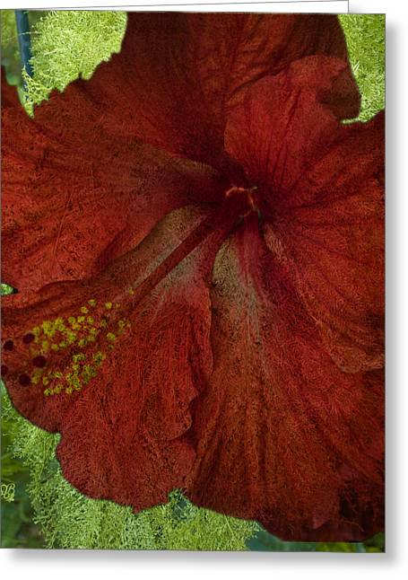 Hibiscus Plus Fern Greeting Card