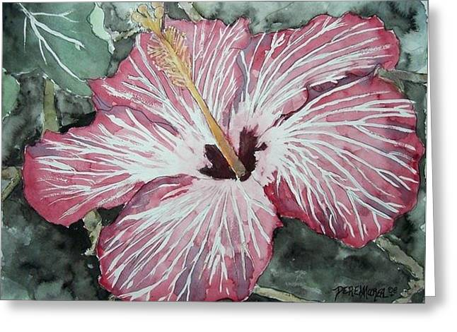Hibiscus Greeting Card by Unknown