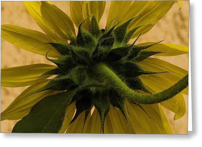 Greeting Card featuring the photograph Hidden Beauty by Michael Friedman