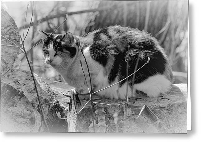 Greeting Card featuring the photograph Hiding by Eunice Gibb