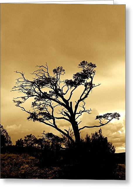 High Country Tree Greeting Card by FeVa  Fotos