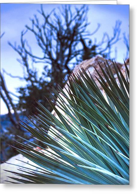 High Desert Cactus Greeting Card by Jeffery Reynolds