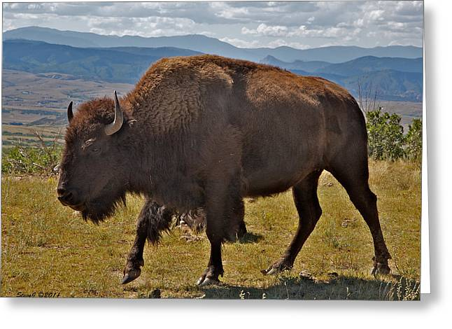 High Plains Buffalo Greeting Card by Stephen  Johnson