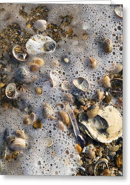 High Tide Line Greeting Card by Adrian Bicker