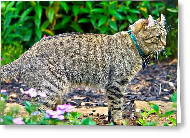Highland Lynx Cat In Garden Greeting Card by Susan Leggett
