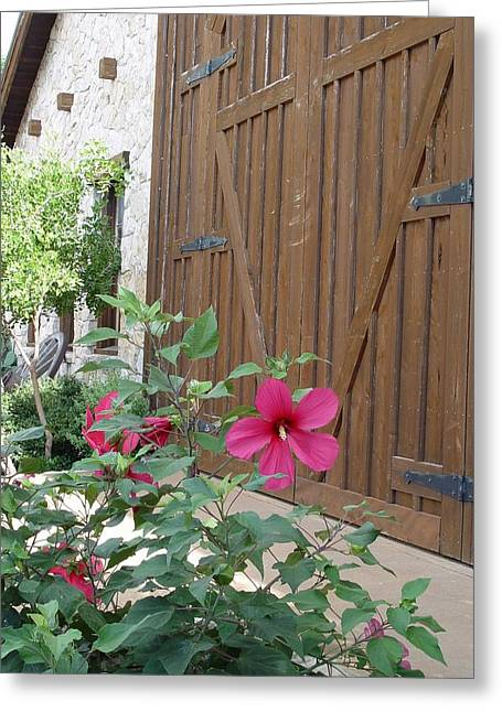 Hill Country Hibiscus Greeting Card by Elizabeth Sullivan