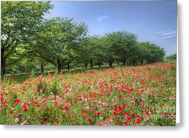 Hill Where A Poppy Bloom Greeting Card by Tad Kanazaki