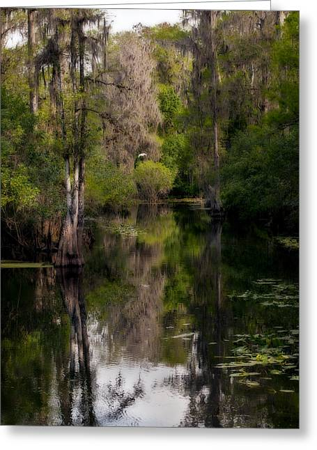 Hillsborough River In March Greeting Card
