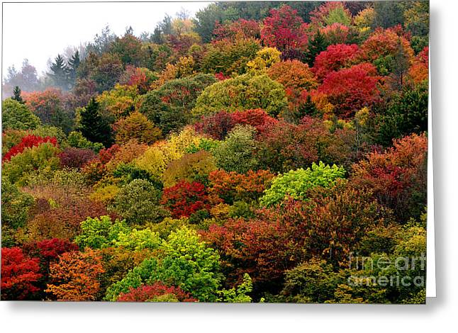 Hillside Canvas Fall Color Greeting Card by Thomas R Fletcher
