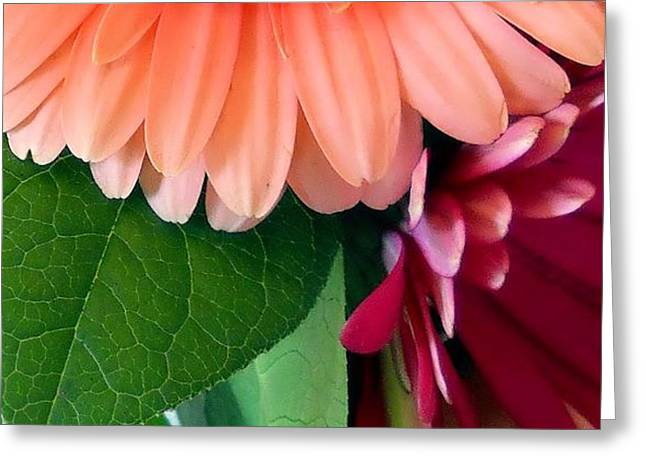 Greeting Card featuring the photograph Hint Of Daisies by Lynnette Johns