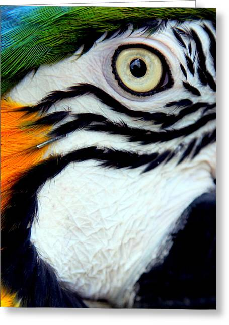 His Watchful Eye Greeting Card by Karen Wiles