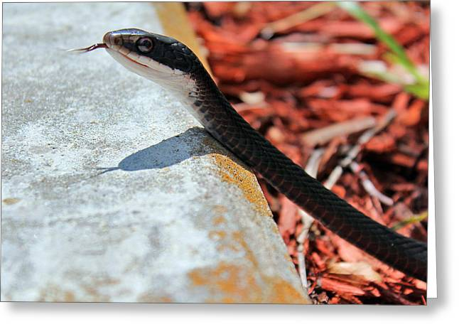 Hiss With Forked Tongue Greeting Card by Artistic Photos