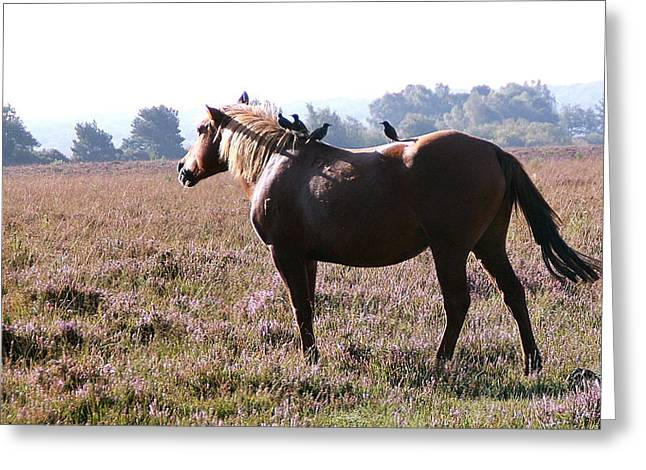 Hitching A Ride Greeting Card by Karen Grist