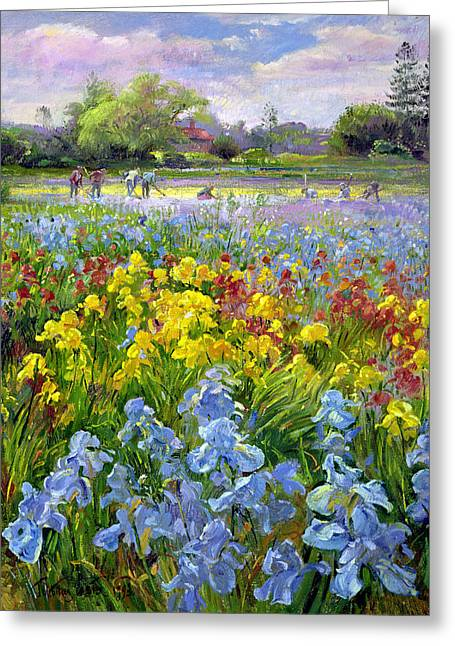 Hoeing Team And Iris Fields Greeting Card by Timothy Easton