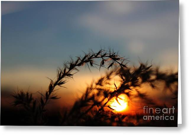 Hold On To The Sun Greeting Card by Erica Hanel