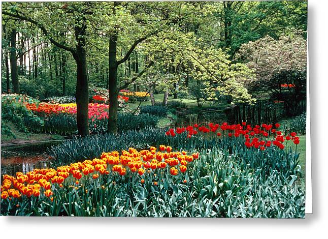 Holland Kuekenhof Garden Greeting Card by Dale P Hanson and Photo Researchers