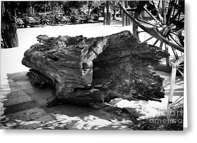 Greeting Card featuring the photograph Hollow Log by Thanh Tran