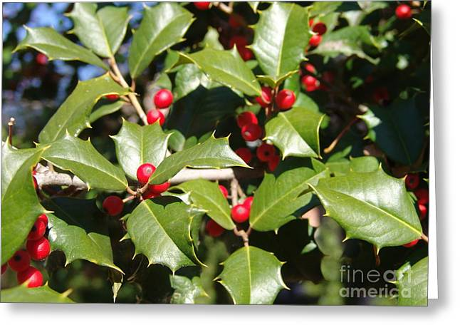Holly 3 Greeting Card by Rod Ismay