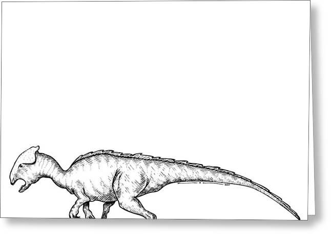 Homalocephale - Dinosaur Greeting Card