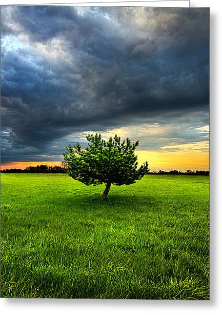 Home Alone Greeting Card by Phil Koch