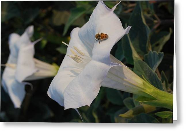 Honey Bee's Delight Greeting Card