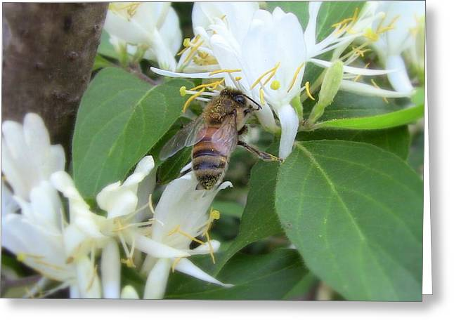 Greeting Card featuring the photograph Honeybee Collecting Pollen by Renee Trenholm