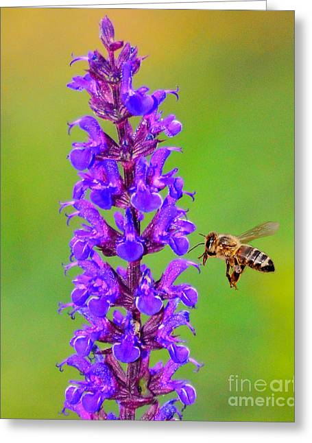 Greeting Card featuring the photograph Honeybee N Blooms by Jack Moskovita