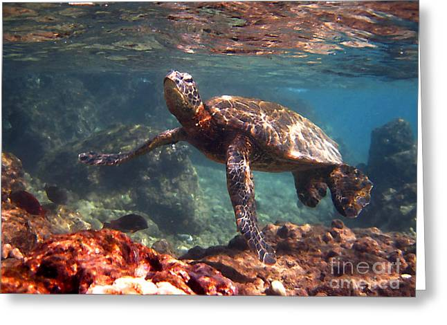Honu In The Shallows Greeting Card