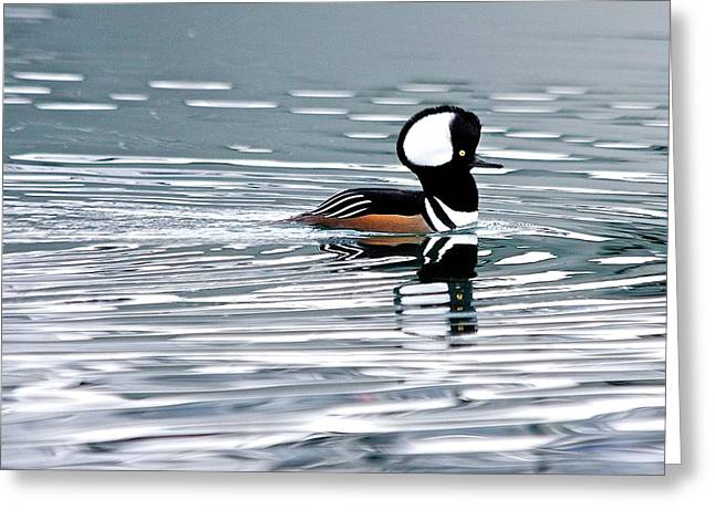 Greeting Card featuring the photograph Hooded Merganser by Scott Holmes