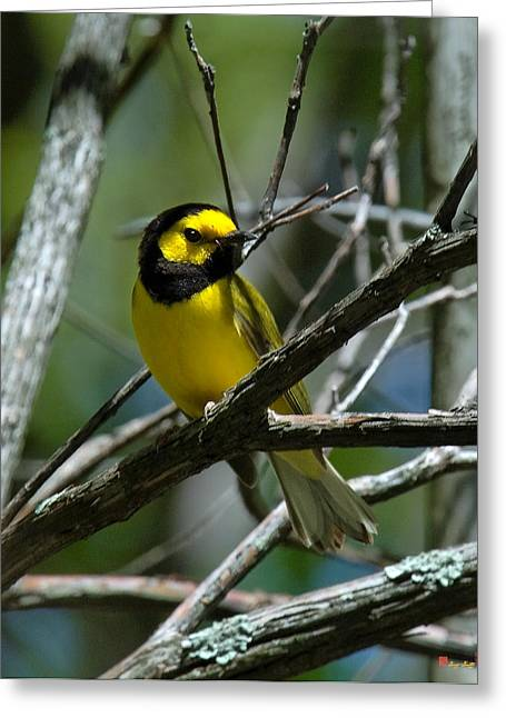 Greeting Card featuring the photograph Hooded Warbler Dsb166  by Gerry Gantt