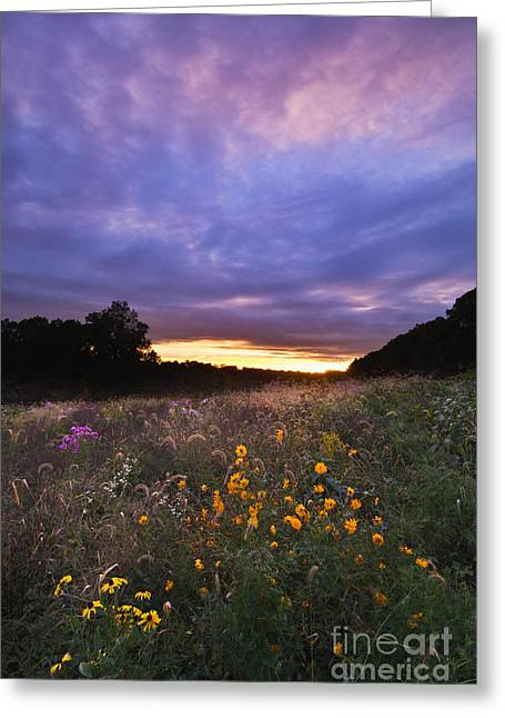 Hoosier Sunset - D007743 Greeting Card by Daniel Dempster