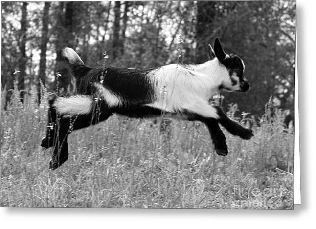 Hop Skip Jump Greeting Card by Christean Ramage