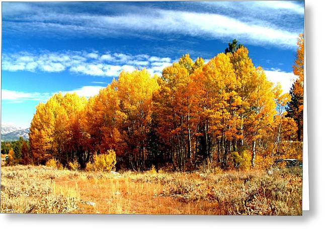 Hope Valley Aspens Greeting Card by Michael Courtney