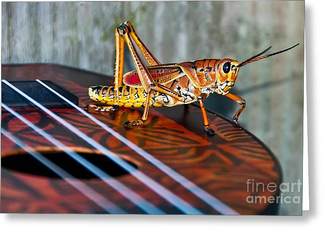 Hopper On A Uke Greeting Card by Luna Jade