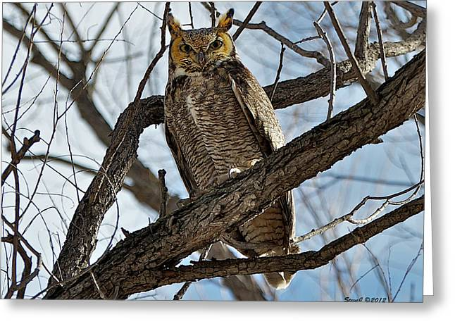 Greeting Card featuring the photograph Horned Owl In Tree by Stephen  Johnson