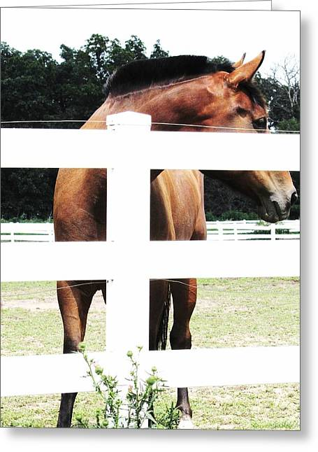 Horse-4 Greeting Card by Todd Sherlock