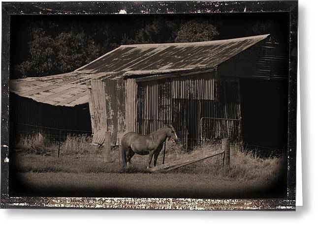 Horse And Old Barn Greeting Card